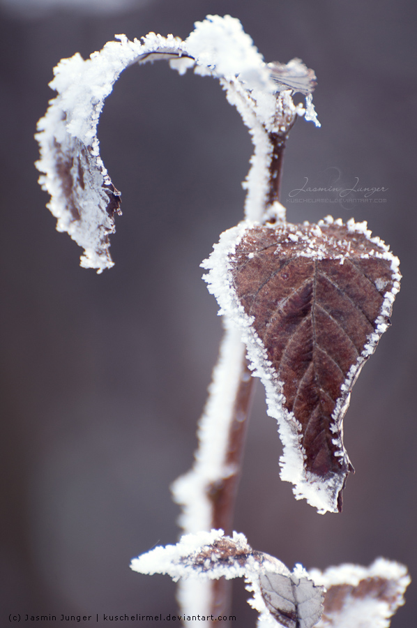 My Frozen Heart by kuschelirmel