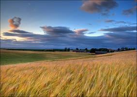 Golden Fields by Meowgli