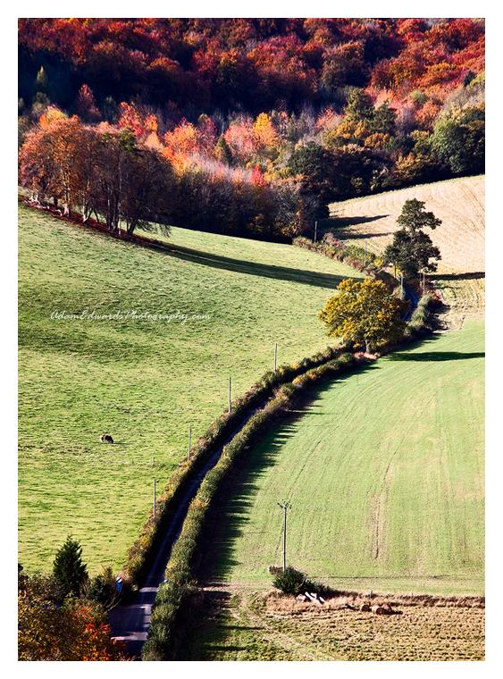 Unto Autumn by Meowgli