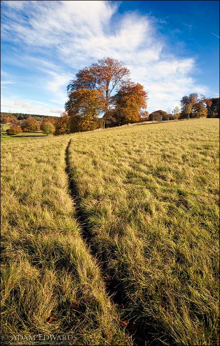 Trail by Meowgli