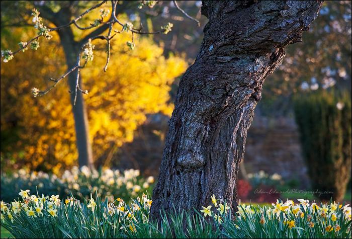 Garden Delights by Meowgli