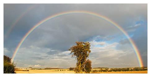 Under the Rainbow by Meowgli