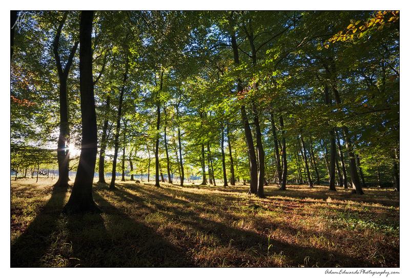 Woodland Stripes by Meowgli