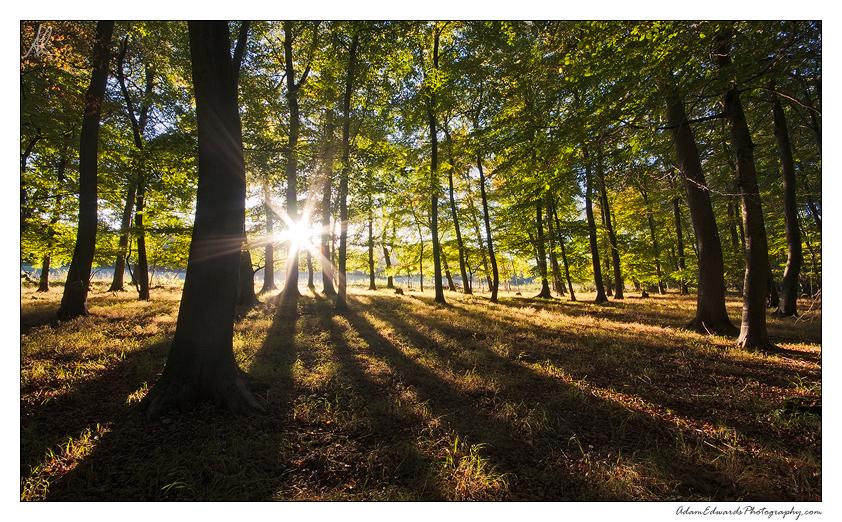 Woodland Light by Meowgli