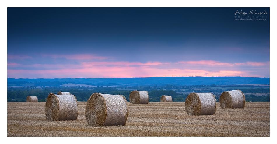 Twilight Harvest by Meowgli