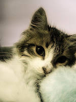 KittyBoi by xenferious