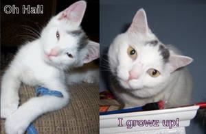 Kitten to Cat