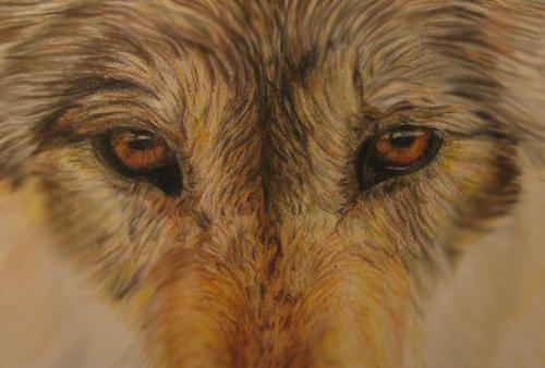 eye of the wolf pdf