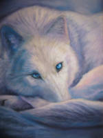 White wolf in snow by Acaciacat