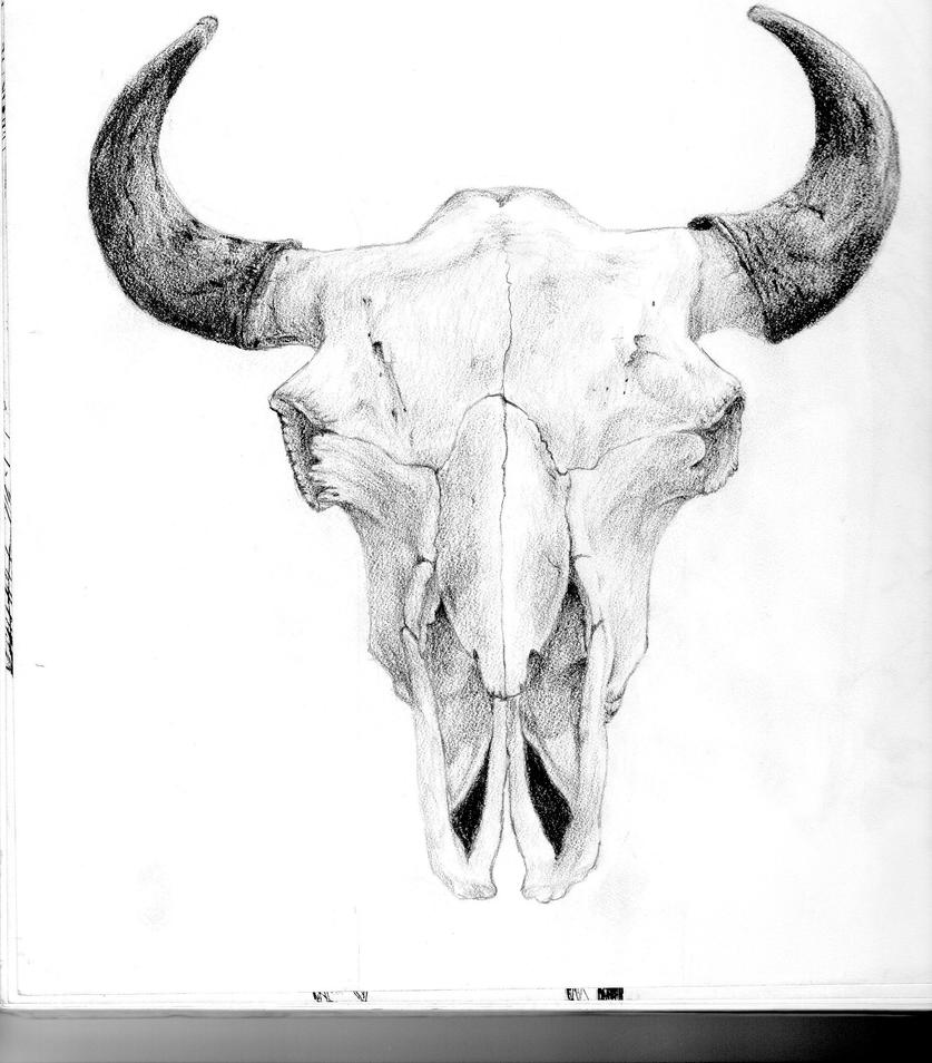 Cow Skull Drawings Of Heads Pictures to Pin on Pinterest ...
