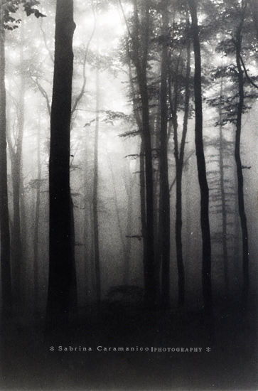 :: Silent Trees :: by sabbbriCA