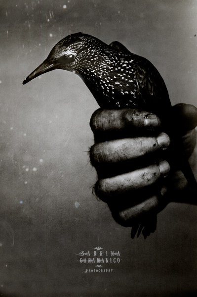 .bird. by sabbbriCA