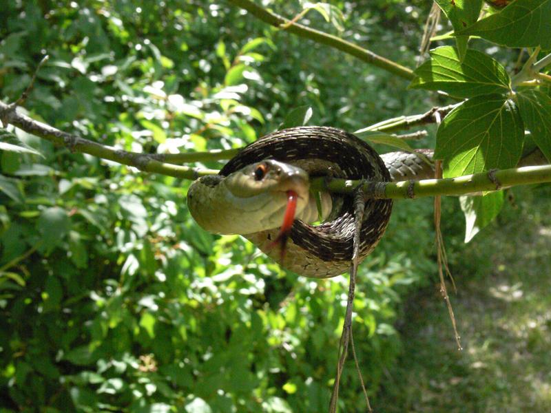 snake tree10 by Wicasa-stock