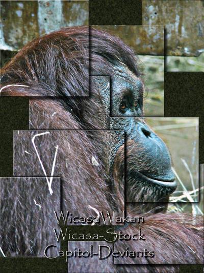 Wicasa-stock's Profile Picture