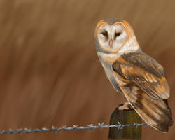 Owl Speedie by AussieMum