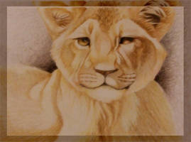 Lion Cub by AussieMum
