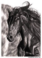 Black Stallion by AnsticeWolf