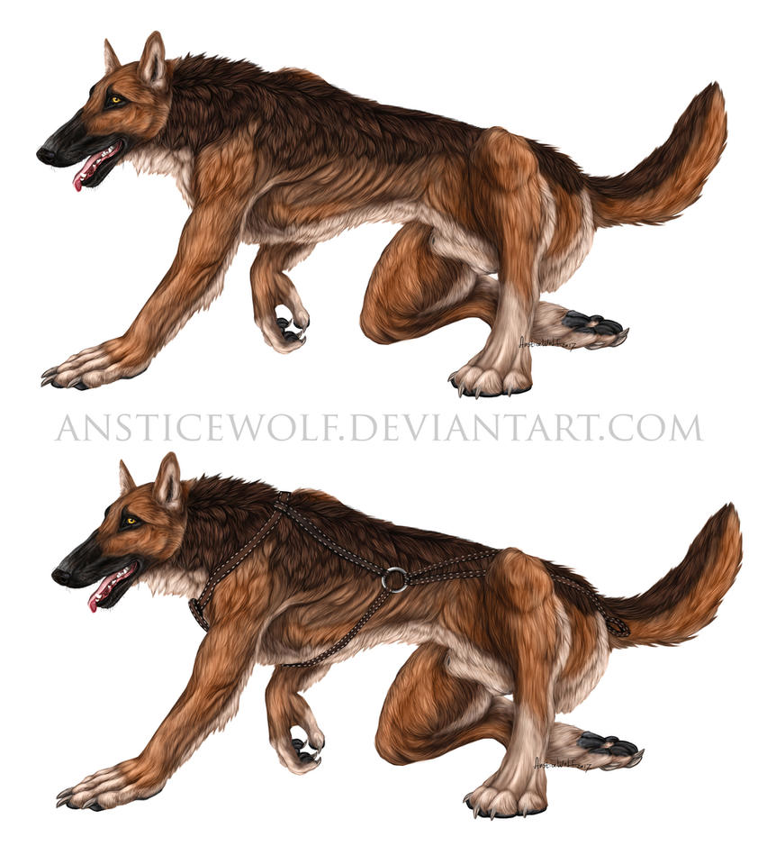 Surf wolfdog design by AnsticeWolf