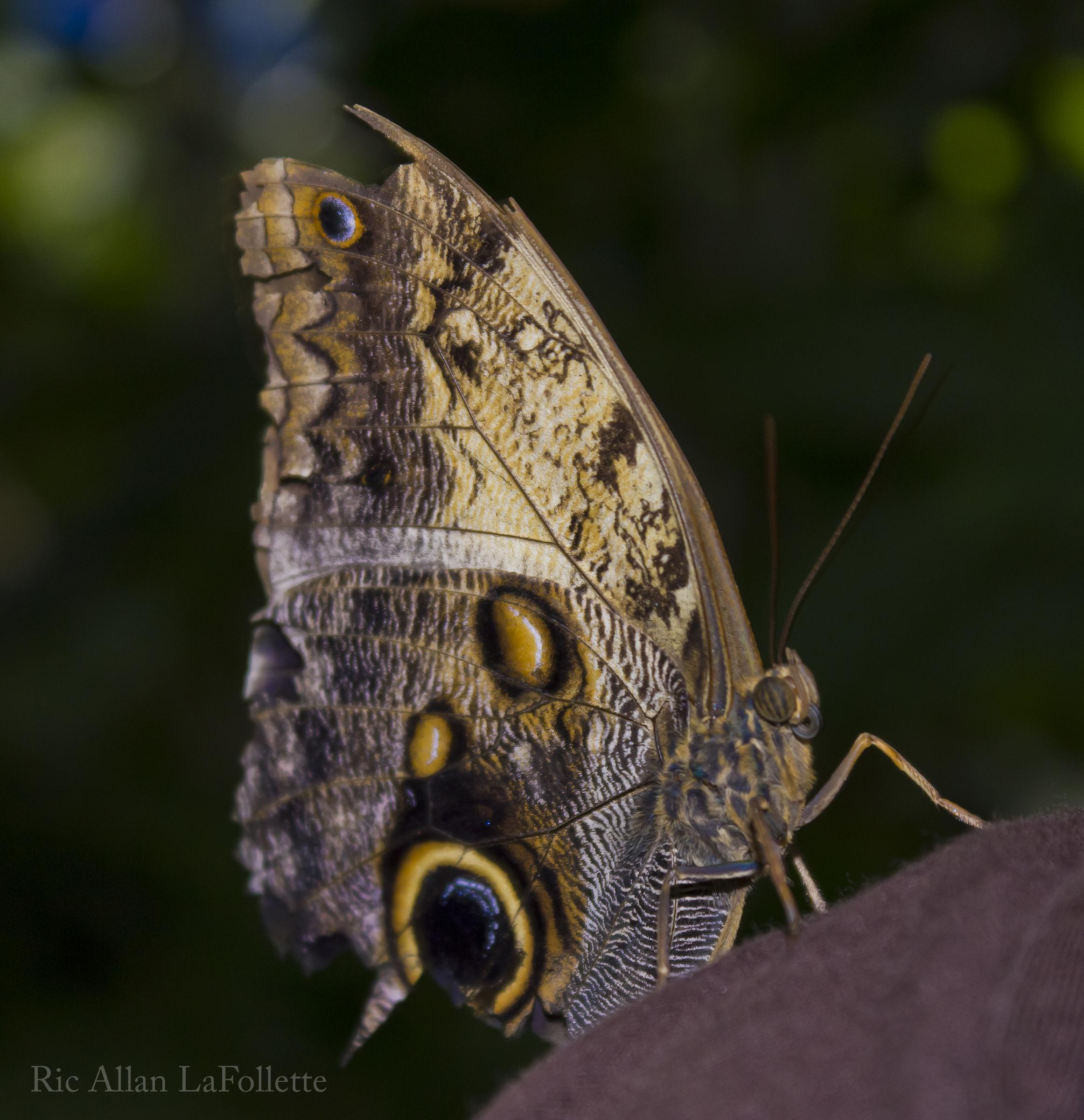 big winged beauty by TheArtOfaMadMan