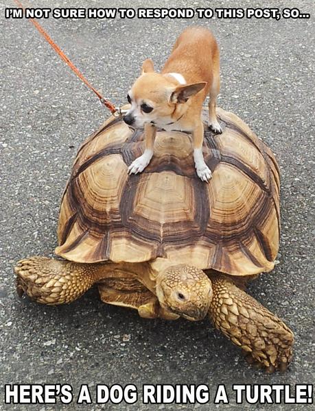 TURTLE-DOG by TheArtOfaMadMan