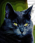 For JocelynR from his cat pic... by vfrrich