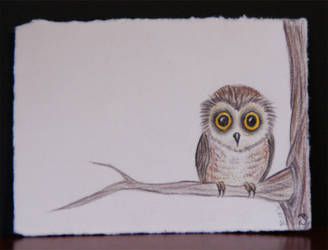 Little Owl by NachtKaetzchen