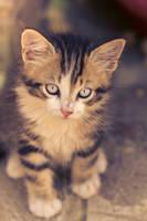 Little cat 2 by canardu