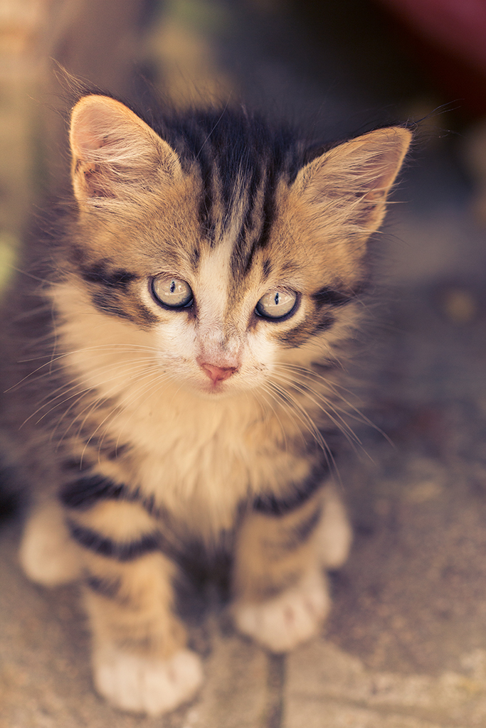 Little cat 2