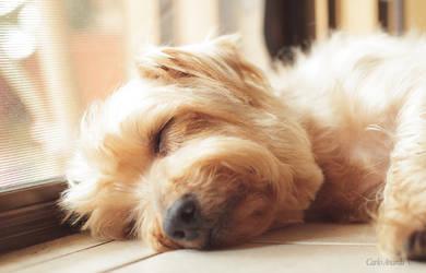 Il jerry che dorme