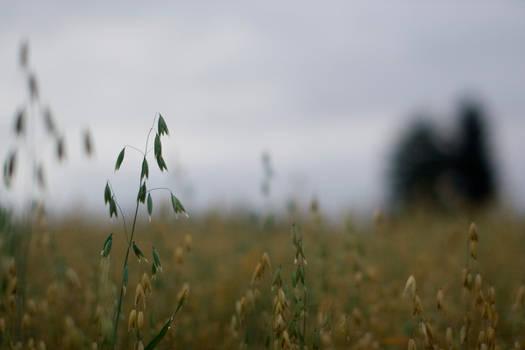 Morning grains