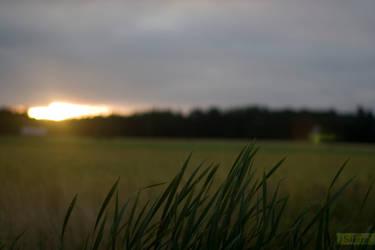 a Meadow