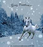 Gray Foalbuster
