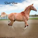 HEE Horse Avatar - Redd Rum