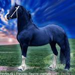 HEE Horse Avatar - Zeus