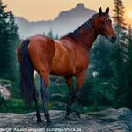 HEE Horse Avatar - Legend