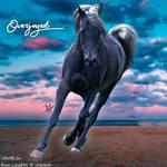 HEE Horse Avatar - Overjoyed