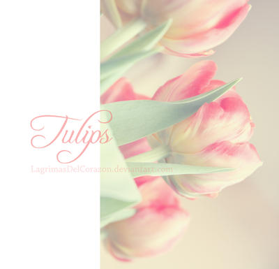 tulips by LagrimasDelCorazon