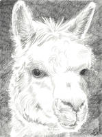 00394 Llama by ThomasGreiner-Mai