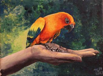 00399 Parrot