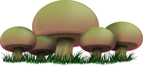 BIC Mushrooms