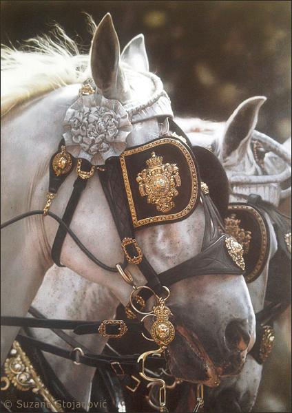 The King by suzanastojanovic