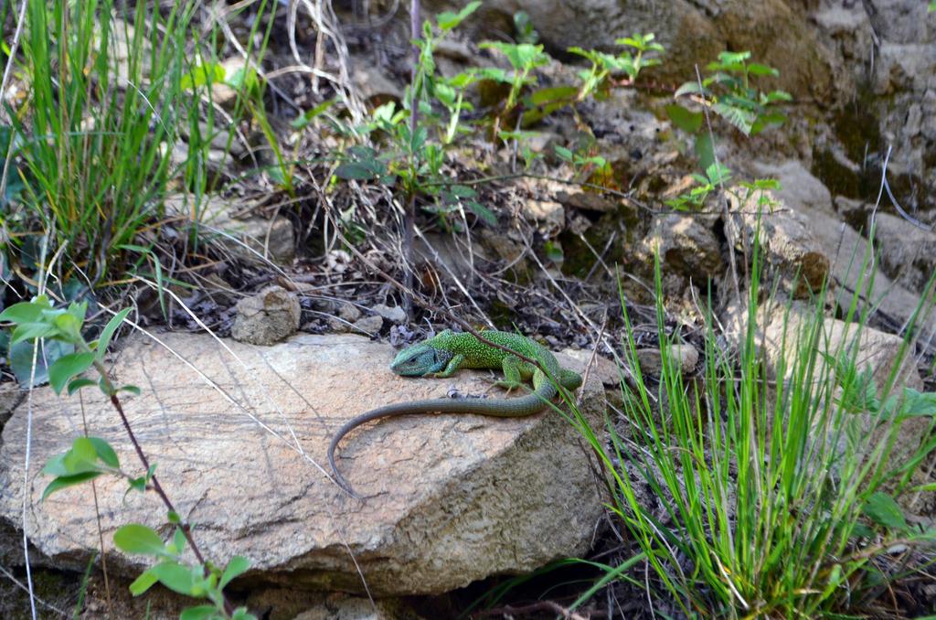 European green lizard by Ren10sei