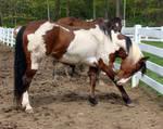 Berich Horse 46 - Tia