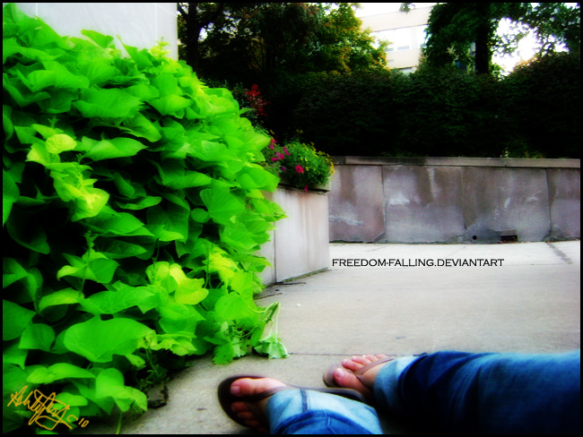 Freedom-Falling's Profile Picture