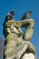 Pigeons on a statue by ExaVolt