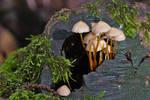 Mushrooms on a stump by ExaVolt