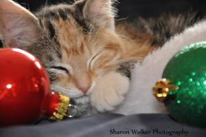 Christmas kitten by xXCaptured-MomentsXx
