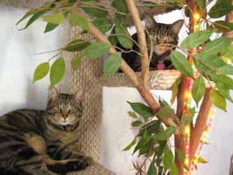 Tiger and Katty Tree by Katttty920