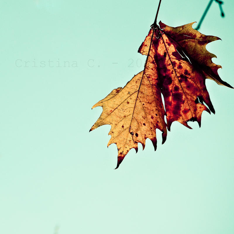 A Leaf. by TinaApple