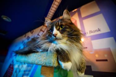 Blue Green Nekobukuro Cat